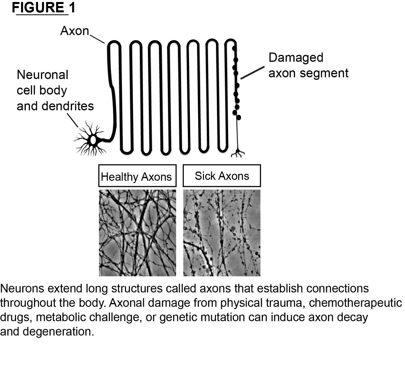 Axon diagram