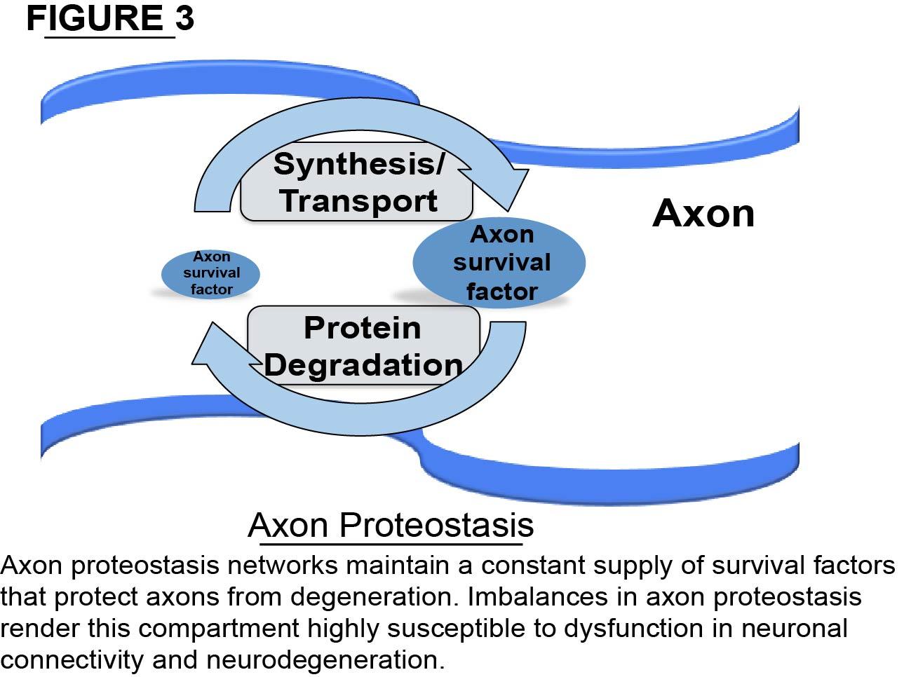Axon proteostasis