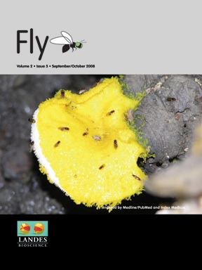 Cover image of flies on a shelf fungus taken at a collecting sites in Louisiana.