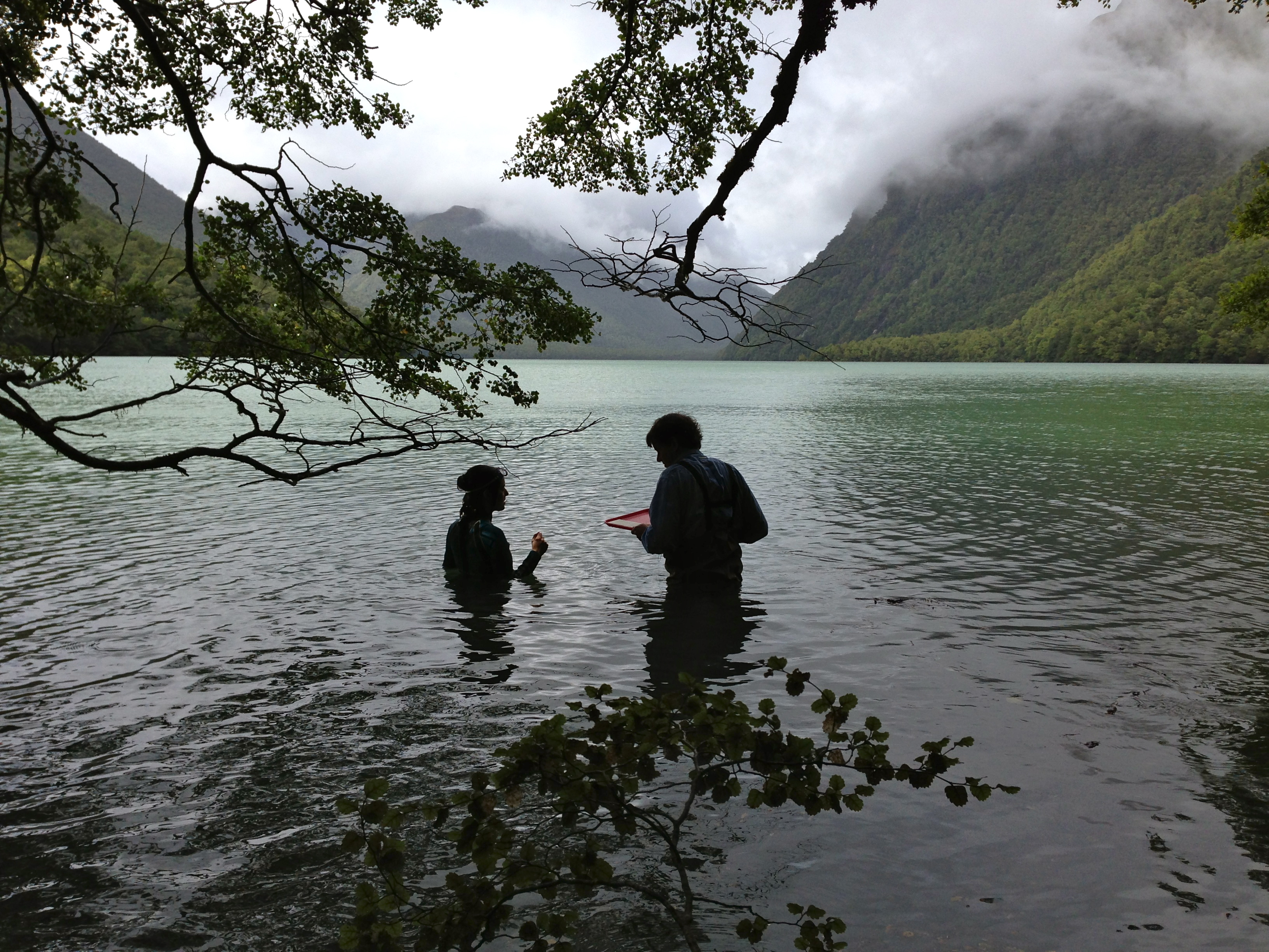 Recovering algae samples from Lake Gunn, a typical habitat for Potamopyrgus antipodarum.