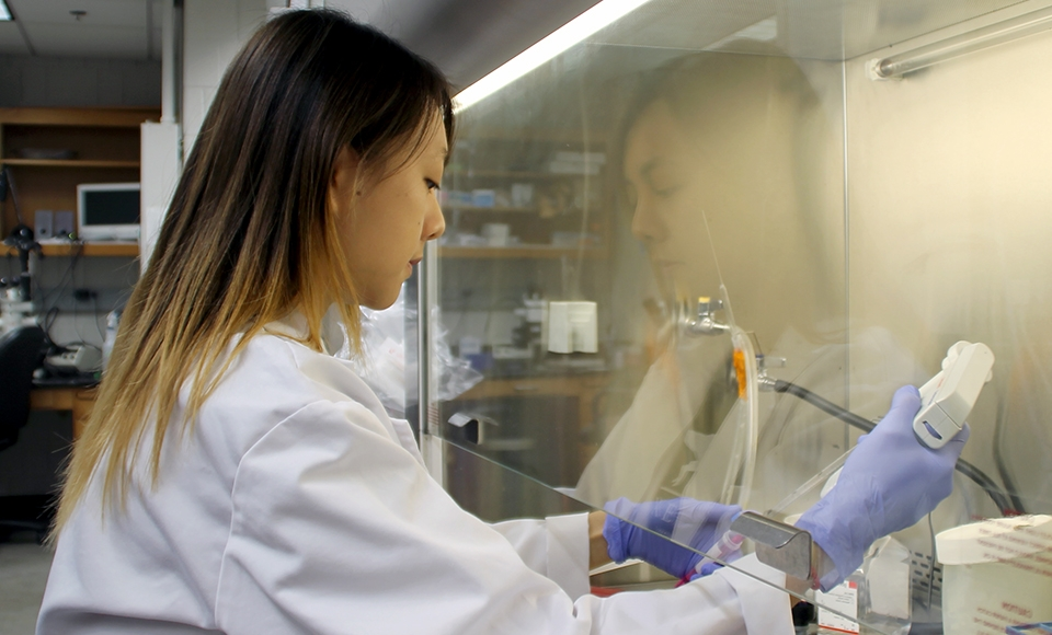 Photo of Karmen Mah, an iBio Ph.D. student, performing research in the Weiner Lab.