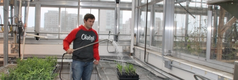 Undergraduate Biology student, Michael Kline, doing research in the Irish Lab.