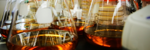 A closeup image of glassware containing laboratory experiments
