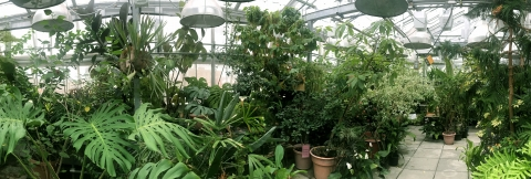 The Biology Greenhouse at the University of Iowa